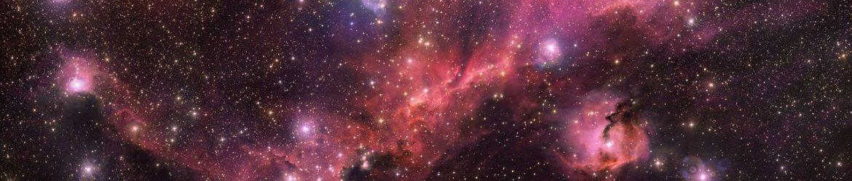 Anatomia di un gabbiano cosmico   MEDIA INAF